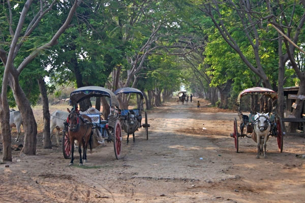 Send picture of Street and horse drawn carriages in the Burmese countryside from Myanmar (Burma) as a free postcard