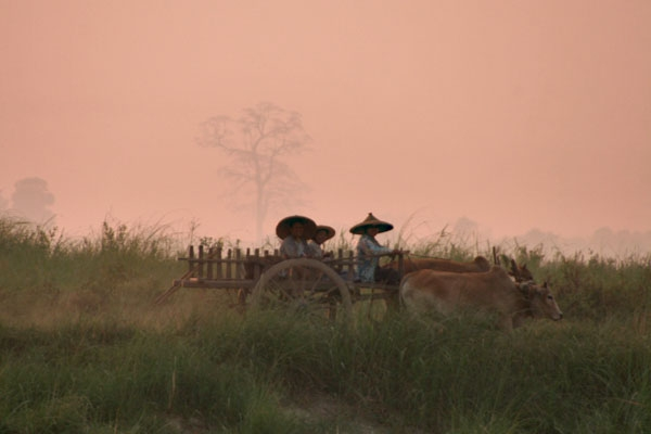 Send picture of Ox cart on the bank of Ayeyarwady river from Myanmar (Burma) as a free postcard