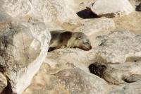 Foto van Dieren in Namibië
