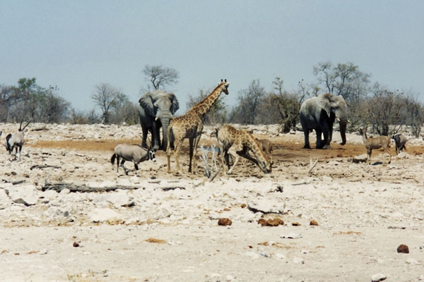 Wild animals in Etosha National Park