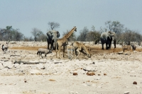Foto van Wild animals in Etosha National Park - Namibia