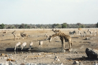 Foto van Animals in Etosha National Park - Namibia