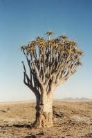 Foto van Natuur in Namibië