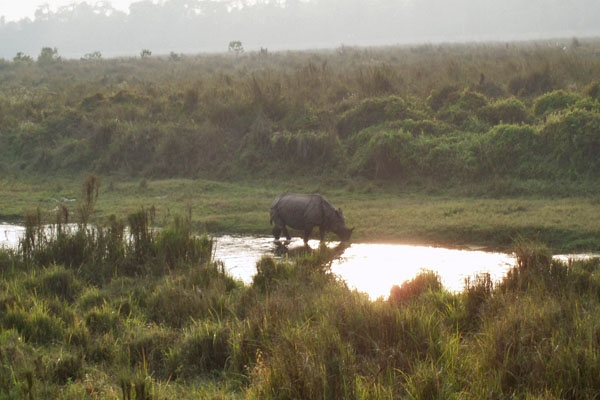 Send picture of Rhino in Chitwan National Park from Nepal as a free postcard