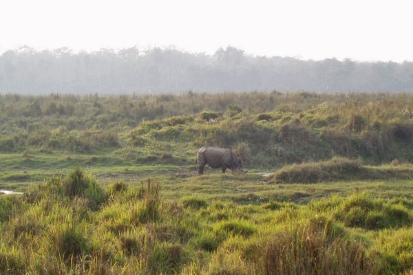 Spedire foto di Landscape and Rhino at Chitwan National Park di Nepal come cartolina postale elettronica