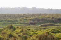 Foto de Landscape and Rhino at Chitwan National Park - Nepal