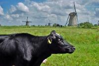 Klik om foto te vergroten van Dieren in Nederland