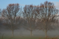 Foto van Dutch trees in the mist - Netherlands
