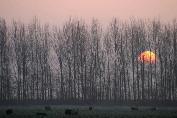 Stuur foto van Sunrise behind trees van Nederland als een gratis kaart