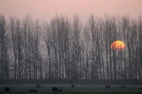 Foto van Sunrise behind trees - Netherlands