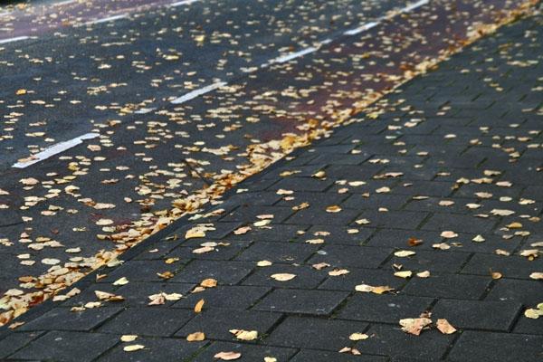 Stuur foto van Fall leaves in an Amsterdam street van Nederland als een gratis kaart