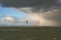 Foto van Kitesurfer in the air on the North Sea in southern Netherlands - Netherlands