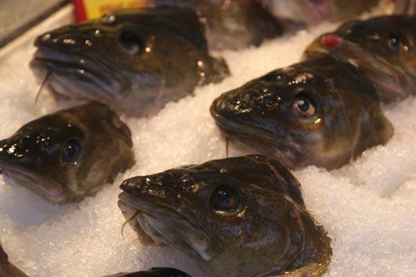 Stuur foto van Fish heads on display van Noorwegen als een gratis kaart