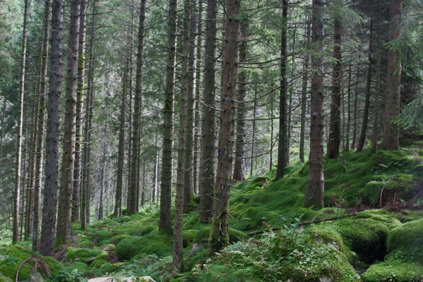 Send picture of Forest in Bergen from Norway as a free postcard