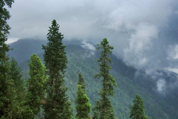 Envoyer photo de Trees and mountain in Nathia Gali de Pakistan comme carte postale électronique