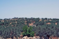 Click to enlarge picture of Nature in Palestinian Territories