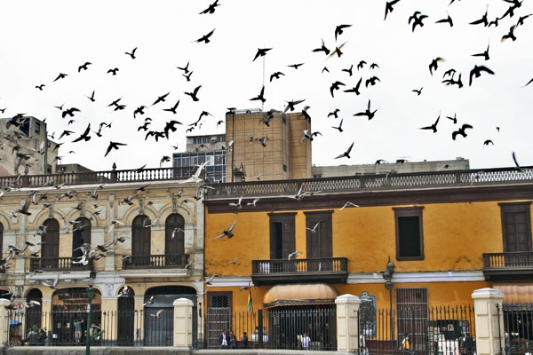 Send picture of Houses and birds in Lima from Peru as a free postcard