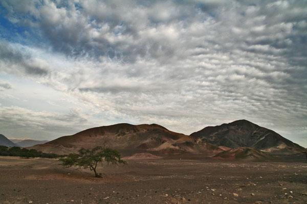 Envoyer photo de Landscape and tree at Chauchilla cemetery de le Pérou comme carte postale électronique