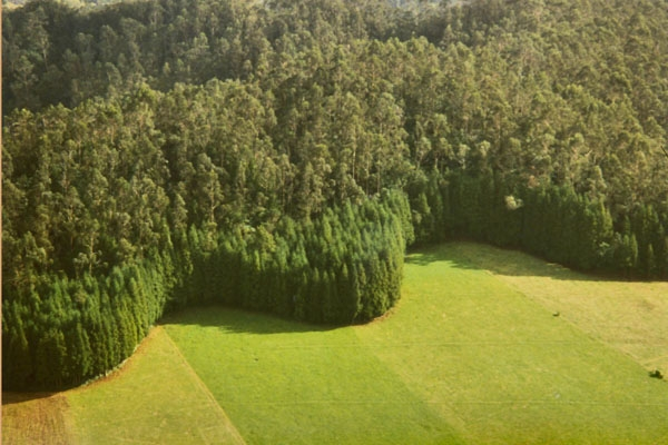 Send picture of Pattern of trees and fields on the Azores from Portugal as a free postcard