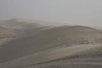 Klik om foto te vergroten van Natuur in Qatar