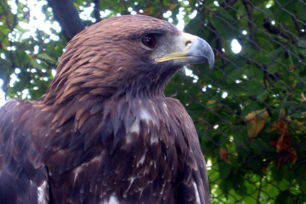 Send picture of Eagle in Belgrade ZOO from Serbia as a free postcard