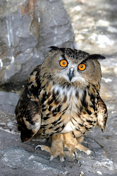 Send picture of Owl in Belgrade ZOO from Serbia as a free postcard