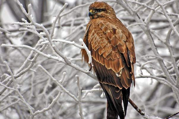 Send picture of Bird of prey near Belgrade from Serbia as a free postcard