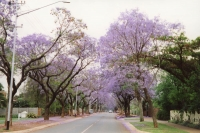 Foto van Street near Pretoria - South Africa