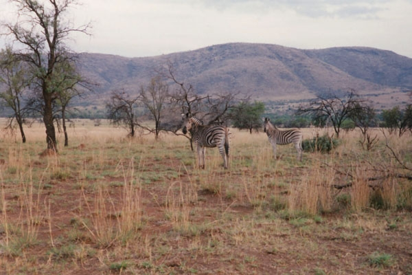 Wild animals in Pilanesberg Park