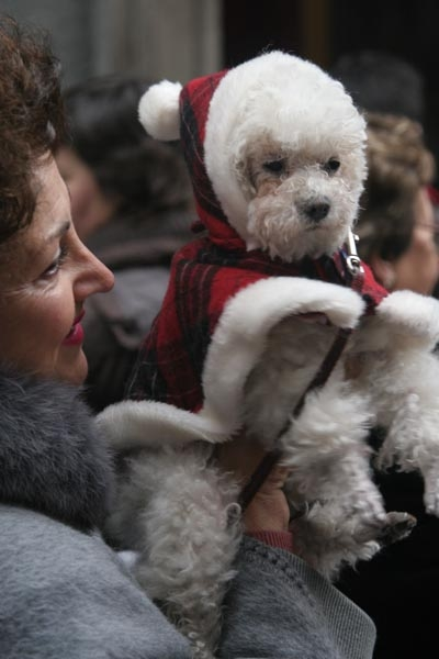 Send picture of A dog dressed up for San Anton Day from Spain as a free postcard