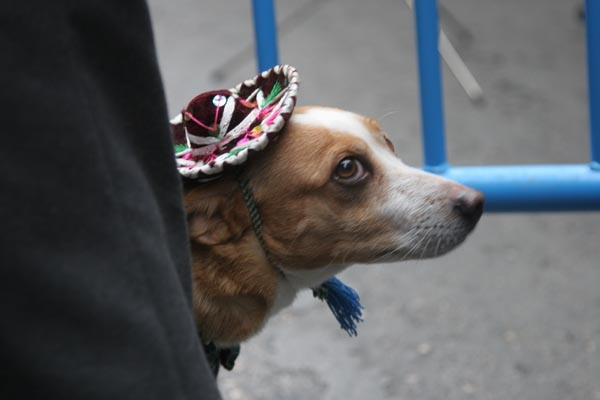 Spedire foto di Dog with sombrero di Spagna come cartolina postale elettronica