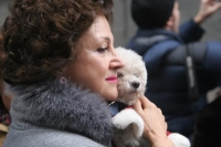 Foto di Madrid woman with her dog - Spain