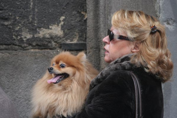 Send picture of Woman and dog in Madrid from Spain as a free postcard