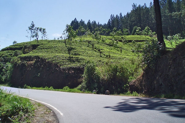 Send picture of Sri Lanka country road from Sri Lanka as a free postcard