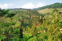 Foto de Hills and tea gardens - Sri Lanka