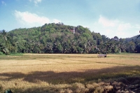 Picture of Fields and hills in Sri Lanka - Sri Lanka