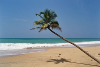 Picture of Palm tree at Kaluthara Beach - Sri Lanka
