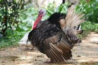 Click to enlarge picture of Animals in Surinam