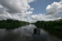 Picture of Nature in Surinam