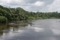 Click to enlarge picture of Nature in Surinam