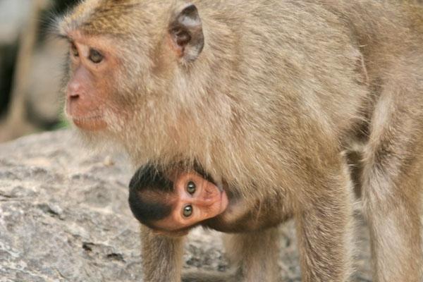 Envoyer photo de Temple monkeys in southern Thailand de Thailande comme carte postale électronique