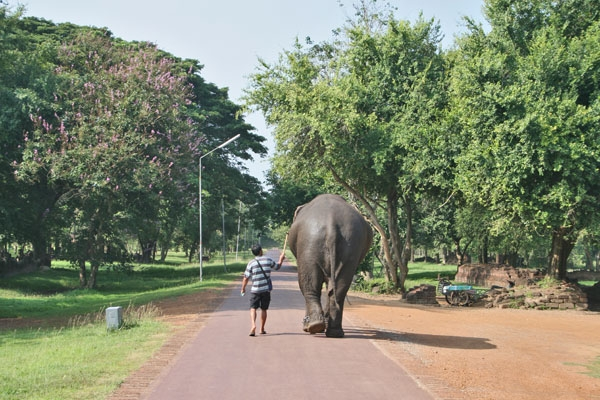 Man walking an elephant in northernThailand