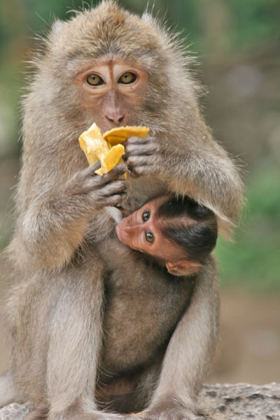 Envoyer photo de Monkeys in southern Thailand de Thailande comme carte postale électronique
