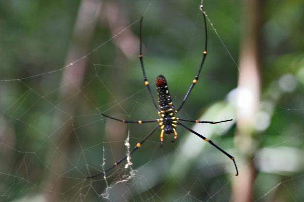 Envoyer photo de Spider in southern Thailand de Thailande comme carte postale électronique