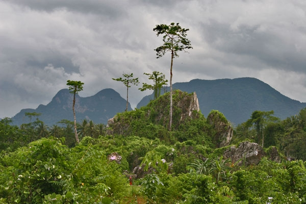 Spedire foto di Lush vegetation close to Raman forest di Thailandia come cartolina postale elettronica