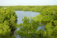 Photo de Caroni swamp landscape in Trinidad - Trinidad & Tobago