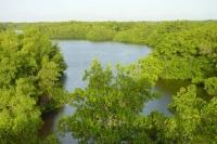Foto de Caroni swamp landscape in Trinidad - Trinidad & Tobago