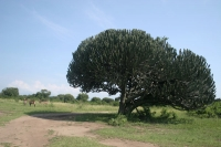 Click to enlarge picture of Nature in Uganda
