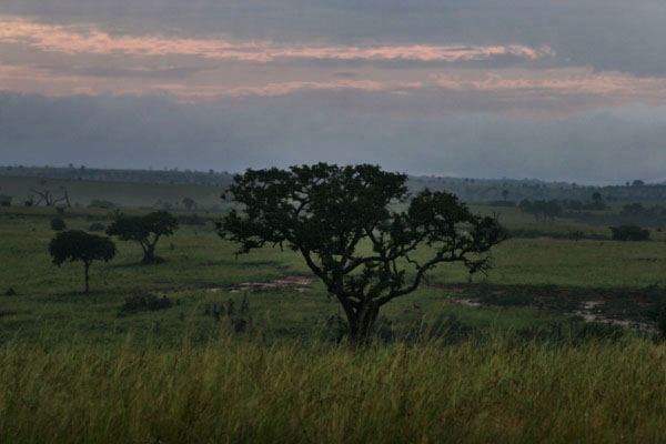 Send picture of Sunrise at the savannah in western Uganda from Uganda as a free postcard