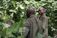 Foto di Armed rangers working in Bwindi Impenetrable National Park - Uganda